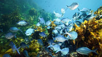 Full-Day Scuba Dive Charter to Hen Island, Auckland, Scuba Diving