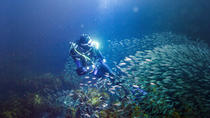 Full-Day Scuba Dive Charter to Little Barrier Island, Auckland, Scuba Diving