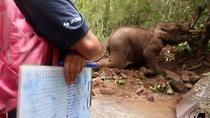 1 Week Volunteering Kindred Spirit Elephant Sanctuary Chiang Mai, Chiang Mai, Multi-day Tours