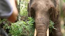 2-Day Kindred Spirit Elephant Sanctuary in Chiang Mai, Chiang Mai, Multi-day Tours