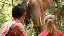 3-Day Kindred Spirit Elephant Sanctuary Chiang Mai, Chiang Mai, null