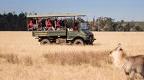 2-Hour Game Drive at the Plettenberg Bay Game Reserve, Garden Route, Nature & Wildlife