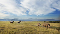 2-Hour Horse Safari at the Plettenberg Bay Game Reserve, Garden Route, Horseback Riding