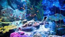 Pattaya Underwater World Tickets