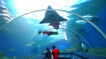 Pattaya Underwater World Tour met hotelovernames, Pattaya