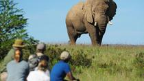 Explorer Camp: 3-Day Walking Safari at Shamwari Game Reserve from Port Elizabeth, Port Elizabeth, ...