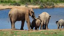 Garden Route,Karoo and Addo Tour, Cape Town, Multi-day Tours