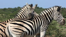 Hluhluwe Safari Guided Day Tour from Durban, Durban, Day Trips