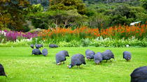 Kirstenbosch Botanical Gardens, Cape Town, Attraction Tickets