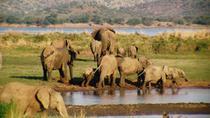 Pilanesberg National Park Safari from Johannesburg, Johannesburg, Day Trips