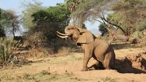 2-Day Amboseli National Park Tour from Nairobi, Nairobi, Multi-day Tours