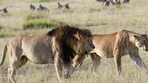 3 Days Masai Mara Road Safari from Nairobi, Nairobi, Multi-day Tours