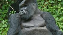 5 Day Glimpse of Gorilla And Lake Mburo Safari From Entebbe, Kampala, Multi-day Tours