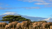 Amboseli National Park from Nairobi Full-Day Tour with Lunch, Nairobi, Day Trips