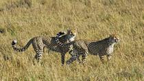 Day Trip to Nakuru National Park from Nairobi, Nairobi, Safaris