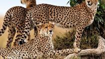 Finch Hattons and Mahali Mzuri Luxury 8-Day Safari from Nairobi, Nairobi, Multi-day Tours