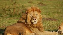 Half-Day Nairobi National Park Guided Tour, Nairobi, Half-day Tours