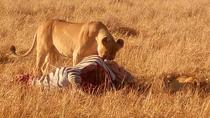 Nairobi City and Nairobi National Park Full-Day Tour with Giraffe Centre, Nairobi, Attraction...