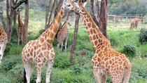 National Museum of Kenya Giraffe Center and Nairobi National Park Guided Day Tour, Nairobi, Day...