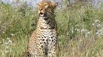 Sweetwaters and Ol Pejeta Conservancy: 2-Day Tour from Nairobi, Nairobi, Overnight Tours