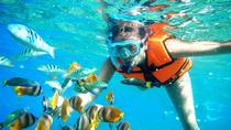 Snorkel Tour in Puerto Morelos from Cancun, Cancun, Snorkeling