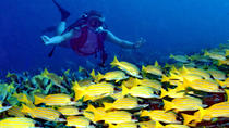 1 tank fun dive from West Side of island including ground transportation, Roatan, Ports of Call ...