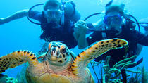 10 fun dive package, Roatan, Multi-day Tours