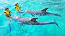 Dolphin Action Swim with ground transportation, Roatan, 4WD, ATV & Off-Road Tours