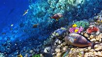 Snorkeling Tour from West Bay, Roatan, Snorkeling