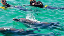 Swim with dolphins and round trip transportation, Roatan, Swim with Dolphins