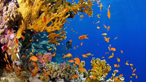 Take the Discover Scuba Diving Course in a few Hours