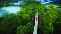 Day Trip to Ulu Temburong National Park from Bandar Seri Begawan Including Lunch, Bandar Seri ...