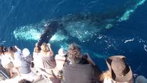 Newport Beach Whale and Dolphin Watching Cruise, Los Angeles, Dolphin & Whale Watching