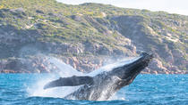 Jet Boat Whale Watching Safari from Dunsborough, Margaret River, Dolphin & Whale Watching