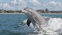Dolphin Safari from St. Augustine, St Augustine, Dolphin & Whale Watching