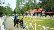 2-Hour Leisure Horse Riding Tour at Bukit Tinggi Berjaya Hills Including Selangor Pewter Tour,...