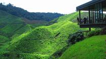 Cameron Highlands Day Tour with Lunch Visiting Strawberry Park - Kea Farm - Rose Garden - Tea ...