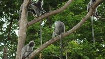 Combo of Silver Leaf Monkeys and Firefly Tour with Boat Ride and Seafood Dinner in Kuala Selangor, ...