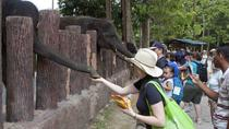 Full Day Batu Caves and Elephant Sanctuary Tour from Kuala Lumpur, Kuala Lumpur, Nature & Wildlife
