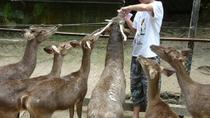 Nature and Wildlife Day Tour from Kuala Lumpur Including Meals, Kuala Lumpur, Day Trips
