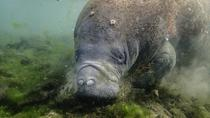 Manatees and Rainbows, Crystal River, Cultural Tours