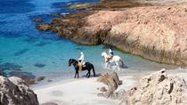3-Day Atlantic Patagonia Wild Nature Experience at Bahia Bustamante Lodge, Puerto Madryn, Multi-day ...