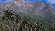 Darwin's Route: Traversing the Chilean Palm Forest, Santiago, null