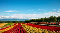 A Must visit spots in Hokkaido - Furano Biei - including Lunch, Sapporo, Cultural Tours