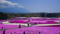 Pink Moss Phlox Festival and Mount Fuji Tour including Strawberry Picking, Tokyo, Private Day Trips