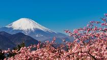 Sakura Cherry Blossom and Hakone Day Trip from Tokyo, Tokyo, Private Day Trips