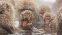 Seasonal Snow Monkey Day Trip including Shabu Shabu or Sukiyaki Lunch, Tokio
