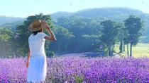 Surrounded by Lavender Aroma in Tambara Lavender Park and Enjoy Peach Picking, Tokyo, Day Trips