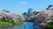 Visit Popular Cherry Blossom Viewing Spots - Buffet Lunch Included, Tokyo, null