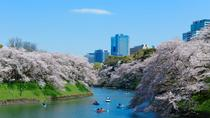 Visit Top 4 Cherry Blossom Watching Spots within Tokyo Area Aquarium of Kasai Rinkai Park and ...